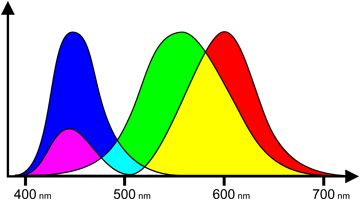 Colour sensitivity of cones (by wavelength)